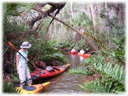 Kayaking on the Chassahowitzka River.