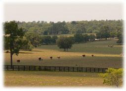 Farm in Lecanto Florida.